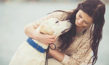 Oferta e-Curso servicios veterinarios