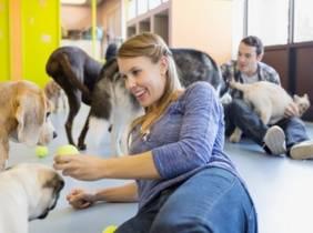 Oferta Bono 10 días: cuidado para perro