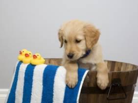 Oferta Peluquería para perros